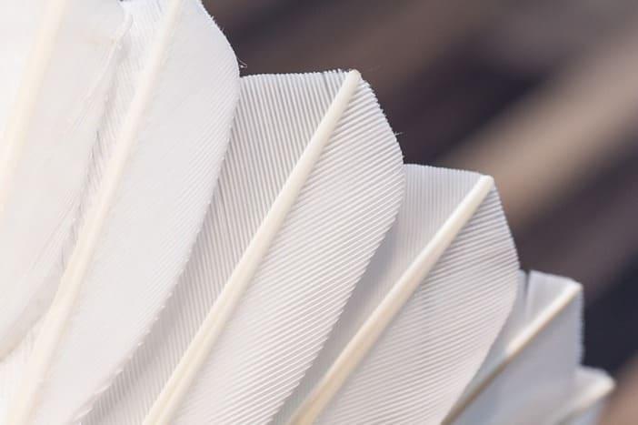 Zoom sur les Plumes d'un volant de Badminton